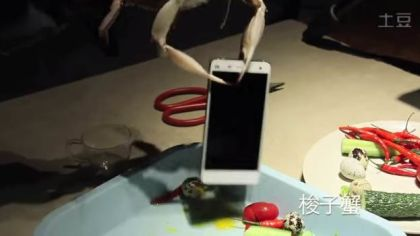 Xiaomi shows the strength of Xiaomi Mi4 using live crabs