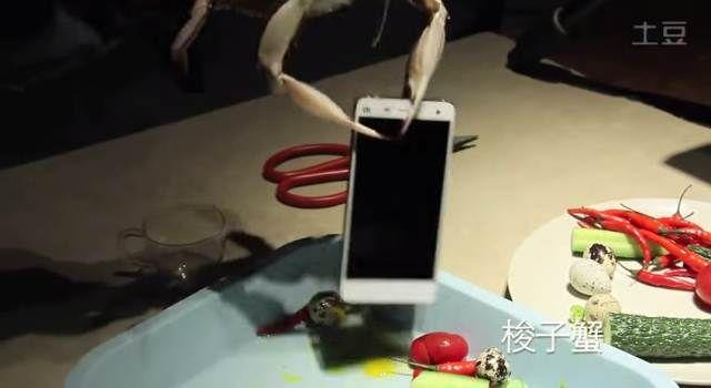 Xiaomi shows the strength of Xiaomi Mi4 using live crabs